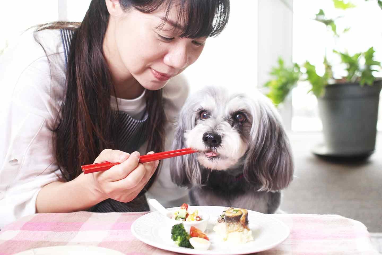 愛犬用いわしのくるくる巻きプレートを食べるシュナウザー 飼い主 黒川栄子