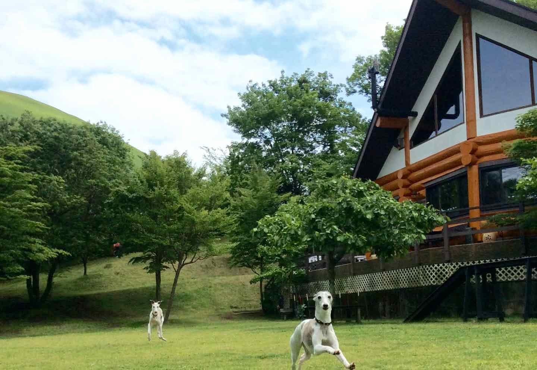2頭の犬が走り回るドッグランスペース