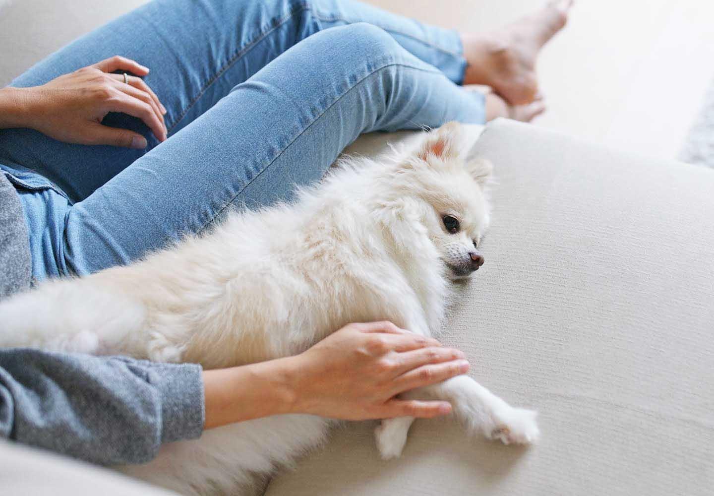 犬が飼い主にくっつく理由とは?_飼い主と犬