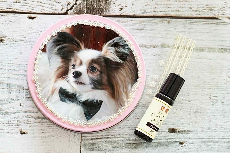 愛犬デザインのうちの子おやつ缶 UVレジンを塗る
