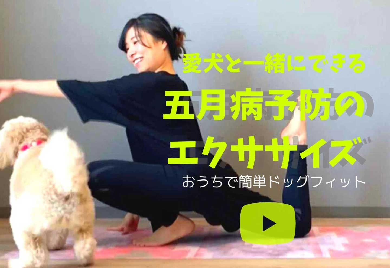 【ドッグフィット動画】愛犬と一緒に五月病対策しよう!気を巡らせる3つの簡単エクササイズ