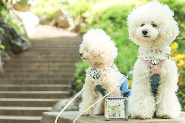 愛犬デザインのうちの子おやつ缶を持ってお散歩