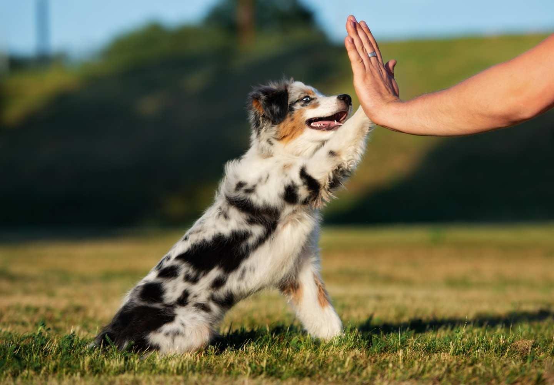 動物愛護法の改正で何が変わった?_犬、動物愛護法