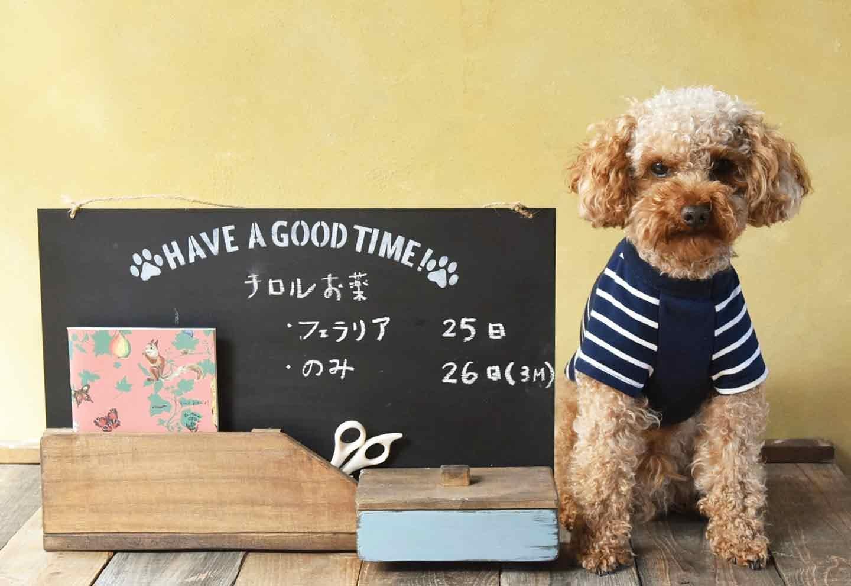 【動画つき】100均アイテムで「収納つき手作り連絡ボード」をDIY!ひと目で分かるから愛犬の健康管理が簡単♪