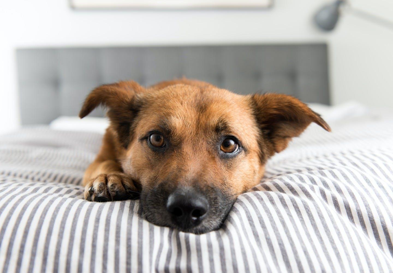 犬も低気圧が苦手!?犬、低気圧