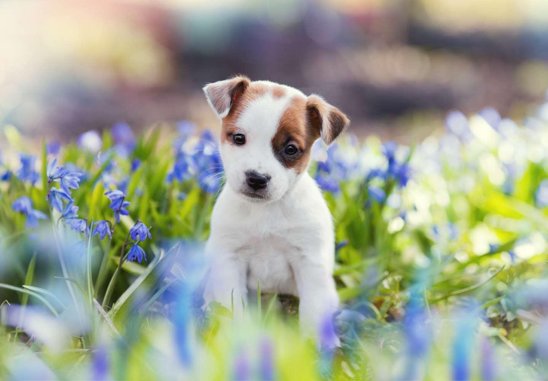 動物愛護法の改正で何が変わった?概要と改正箇所、飼い主が知っておくべきことについてわかりやすく解説します!
