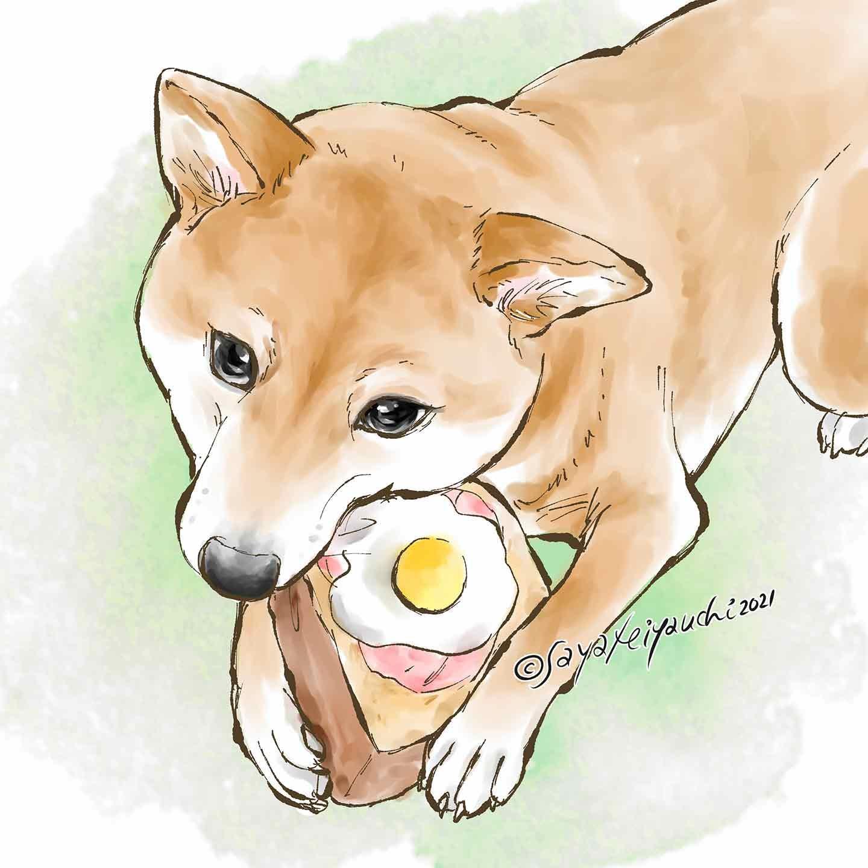 柴犬の大福 漫画家みやうち沙矢さん 愛犬似顔絵作品