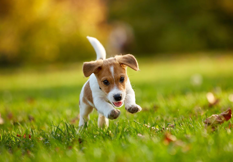 犬の拾い食いをやめさせるには?必要なしつけや予防法を紹介【獣医師監修】