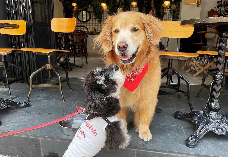 カフェサンズノム 店内テラス犬OK ドッグフレンドリー