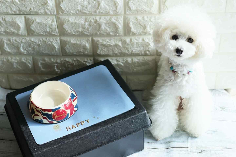 フェイクレザーの愛犬用ランチョンマットの作り方 完成