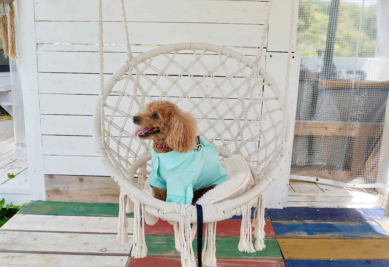 『THE HOUSE FARM』 犬用ブランコ