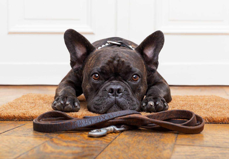 犬のマーキングをやめさせる方法とは?必要なしつけと対処法を解説【獣医師監修】