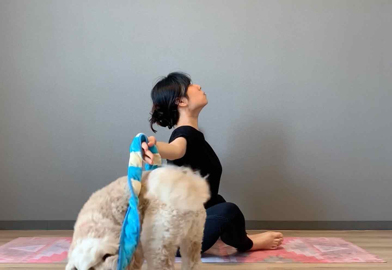 ドッグフィット 呼吸を整えるストレッチ 両手を横に上げる