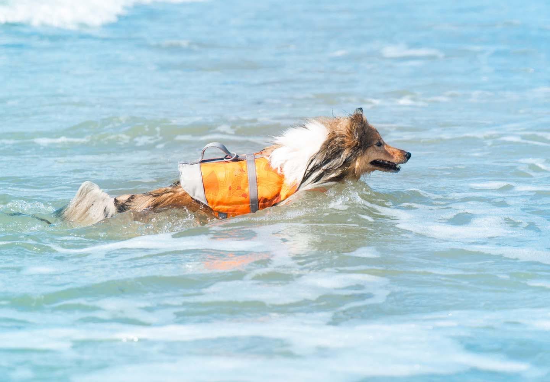 ライフジャケットを着た犬と海