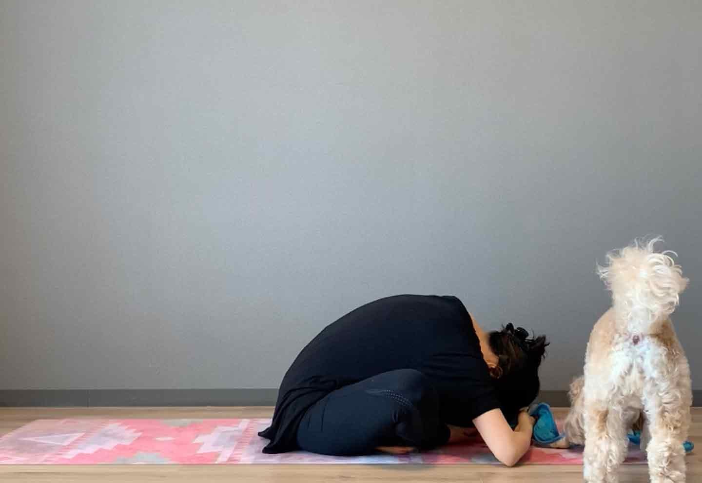 ドッグフィット 呼吸を整えるストレッチ 頭を床に近づける