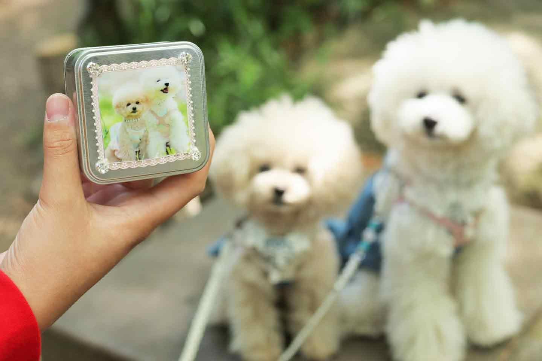 愛犬デザインのうちの子おやつ缶 音に反応する犬