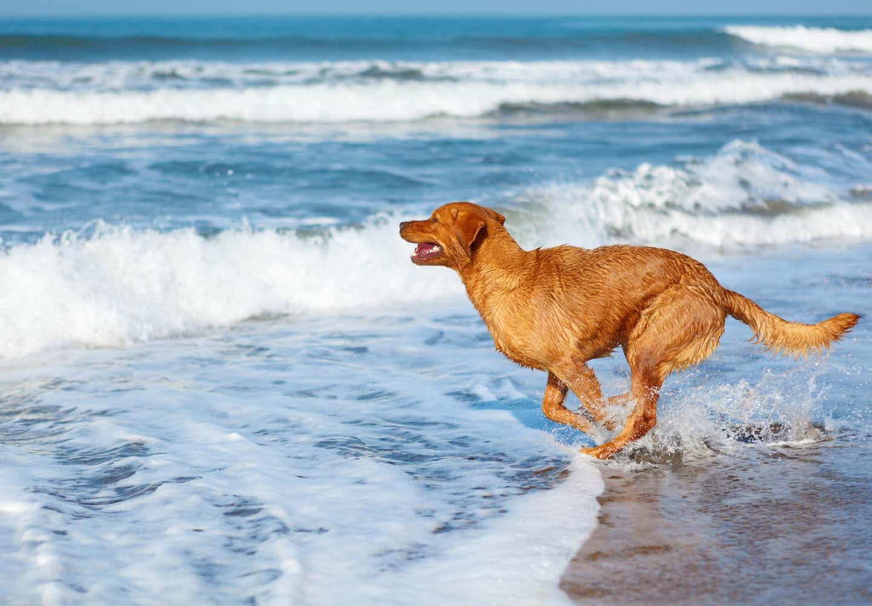 犬と海に行く際の注意点とは?必要な準備と、砂浜や海水へのケアも紹介【獣医師監修】