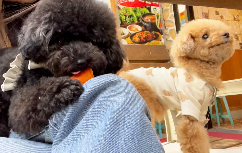 愛犬と本格韓国ランチ『テ〜ハミング』 生野菜 こてつ