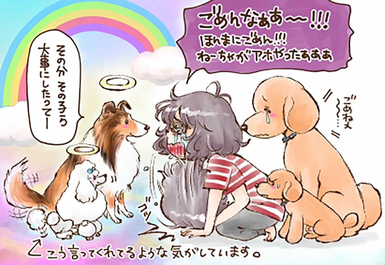 今でも後悔が残る変な『犬の常識』
