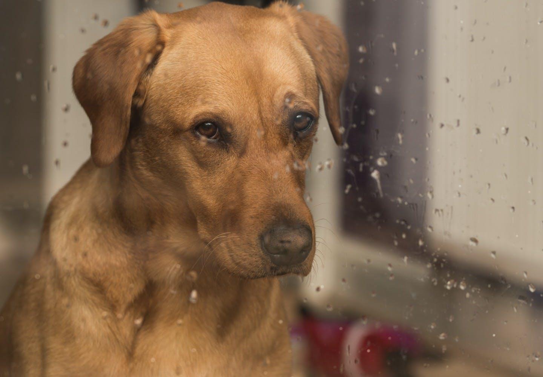 犬も低気圧が苦手!?気圧の変化で体調を崩す理由を獣医師に聞いてみた!