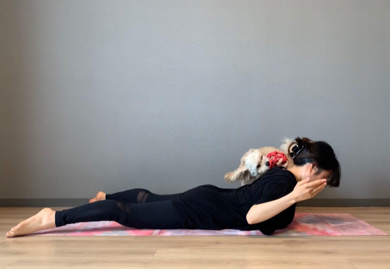 背中引き締めドッグフィット 肩甲骨周りをほぐして鍛える 両肘を脇に寄せる