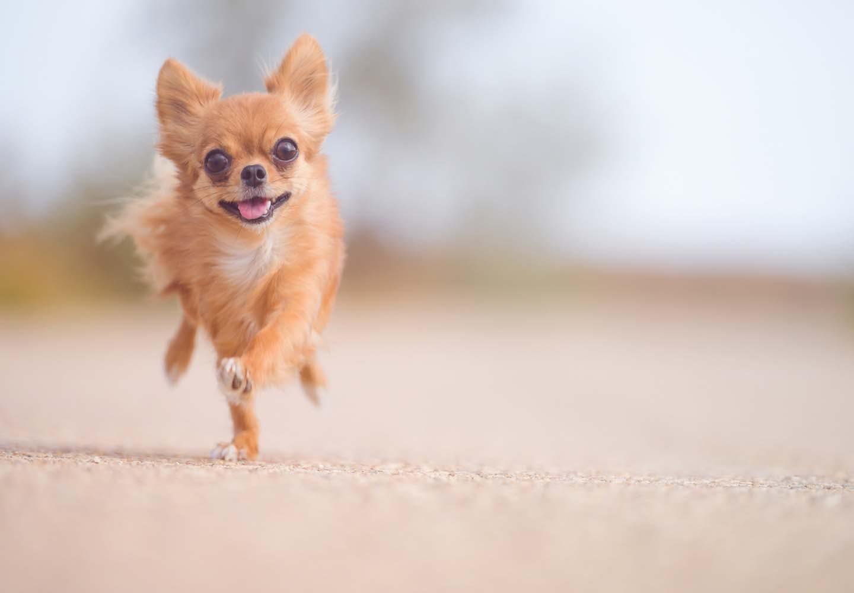 運動する犬