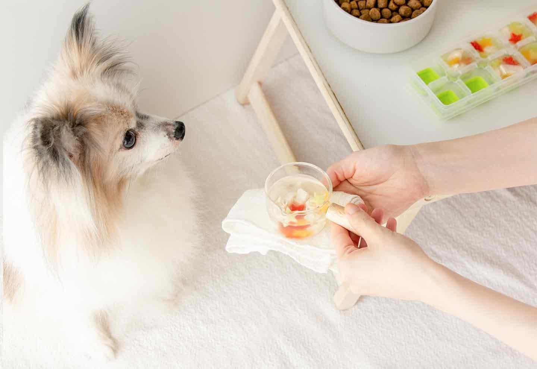 【簡単10分作り置き】愛犬用鶏ささみと夏野菜のスープ♪日常のストックやフードのトッピングにも☆