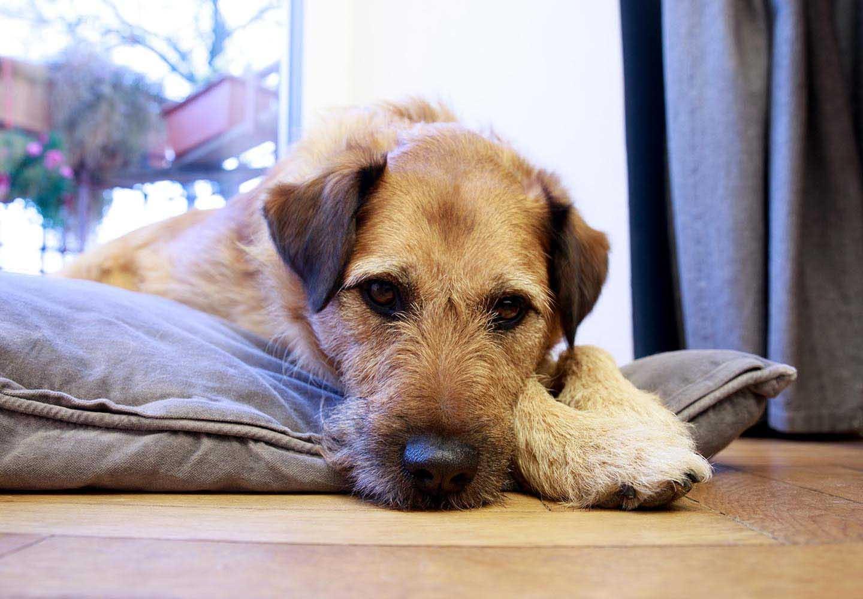 犬の肝臓病とは?原因や症状、病院に行くべきタイミングと予防法について解説【獣医師監修】
