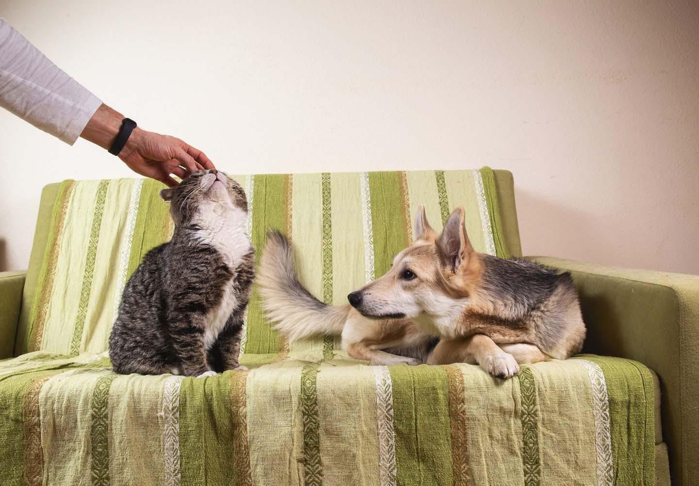 猫に嫉妬する犬