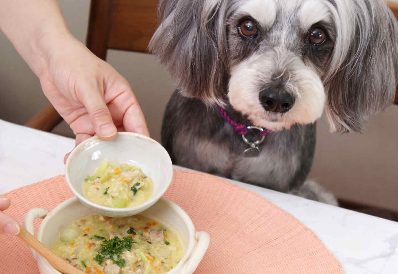 【簡単15分】おやつとしても◎愛犬も食べられる具沢山コーンスープ♪家の野菜と煮るだけで利尿作用が抜群!