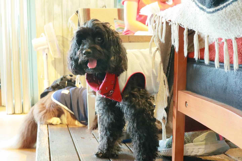 市販の保冷剤を使った《愛犬用クールバンダナ》の作り方 愛犬が着用
