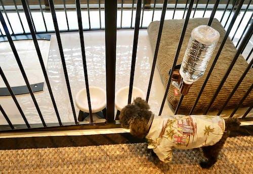 『MALIBU HOTEL』の「ドッグフレンドリールーム」 犬用設備