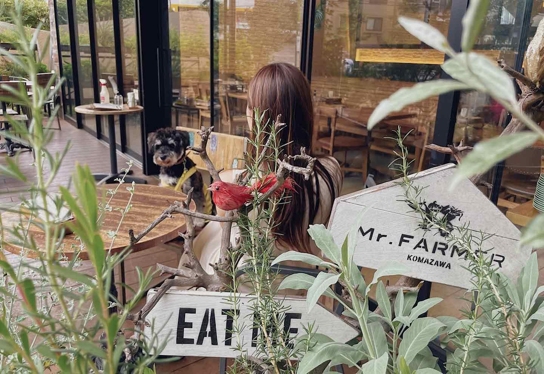 犬 テラス席OK『Mr.FARMER 駒沢公園店』