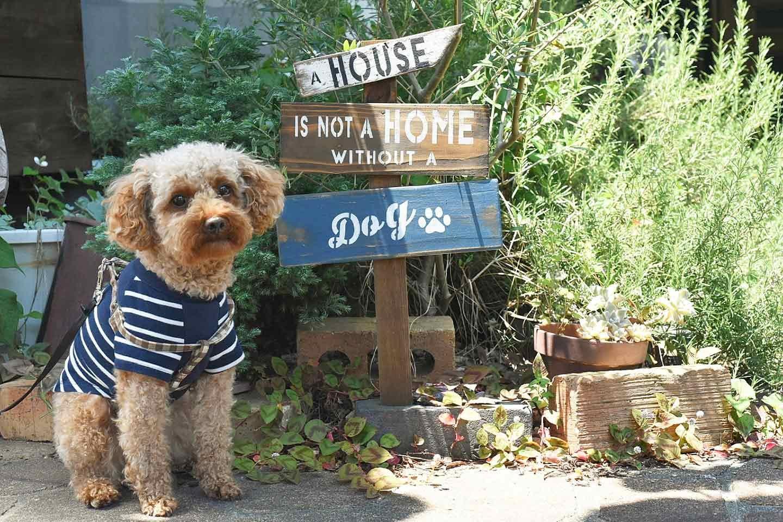【防犯対策にも役立つ】愛犬の存在を知らせるオリジナルのガーデンピック(看板)を手作り♪