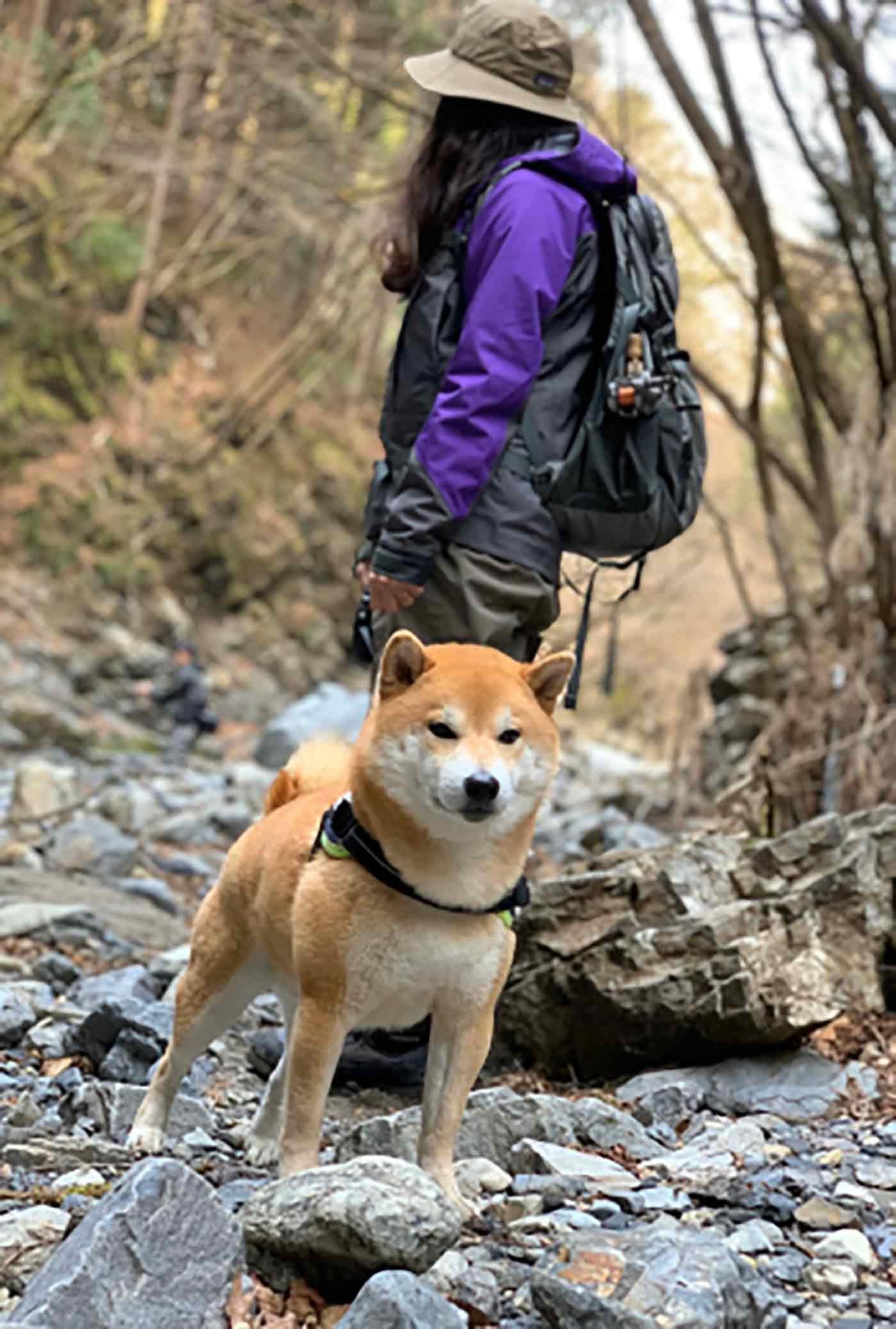 アウトドアを楽しむ犬と飼い主