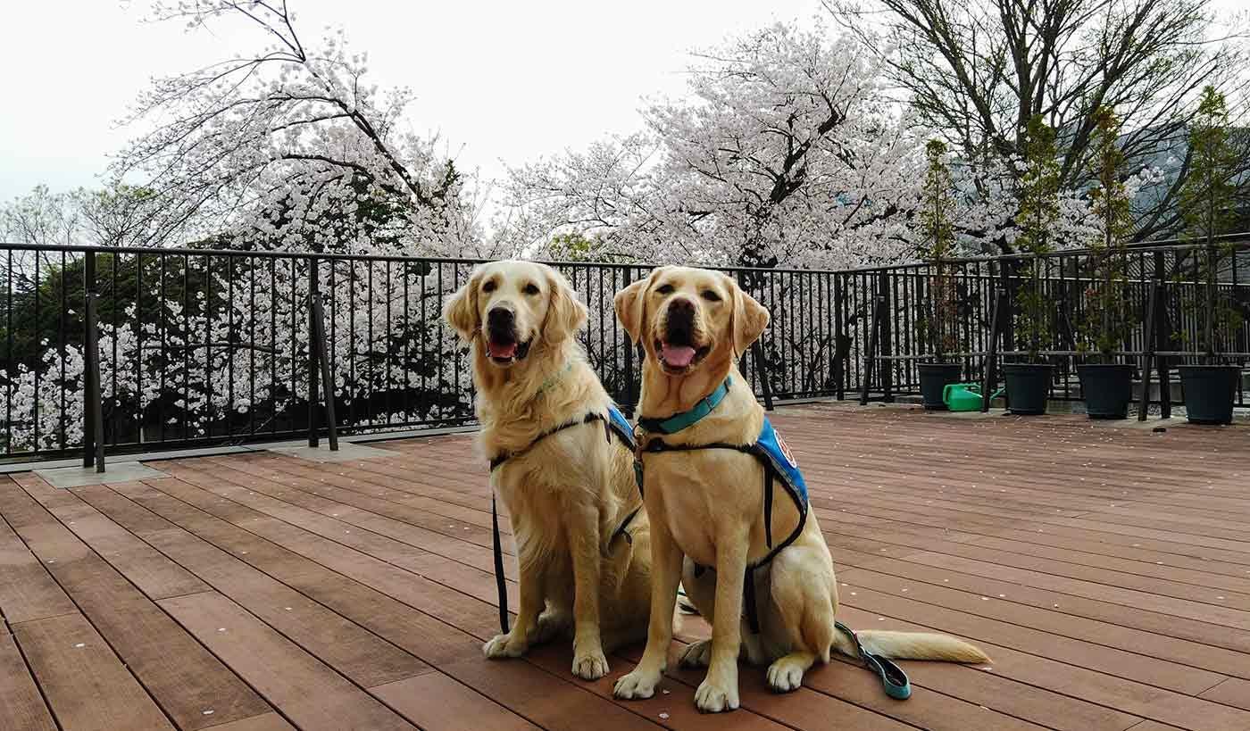 病院で働く犬を知っていますか?入院する子どもの「心のケア」を担うファシリティドッグが新たに2チーム誕生!