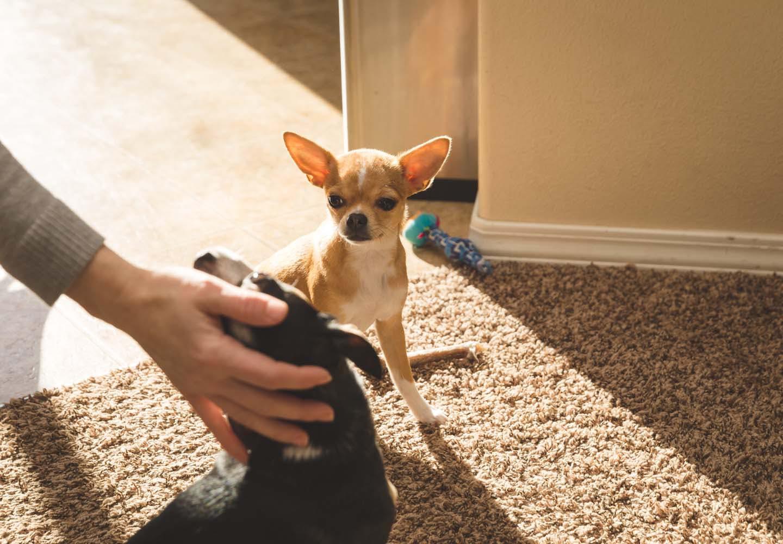 犬もヤキモチをやく!?嫉妬の原因や仕草、対処法を解説【獣医師監修】