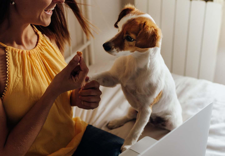 犬が前足で「ちょいちょい」してくる理由