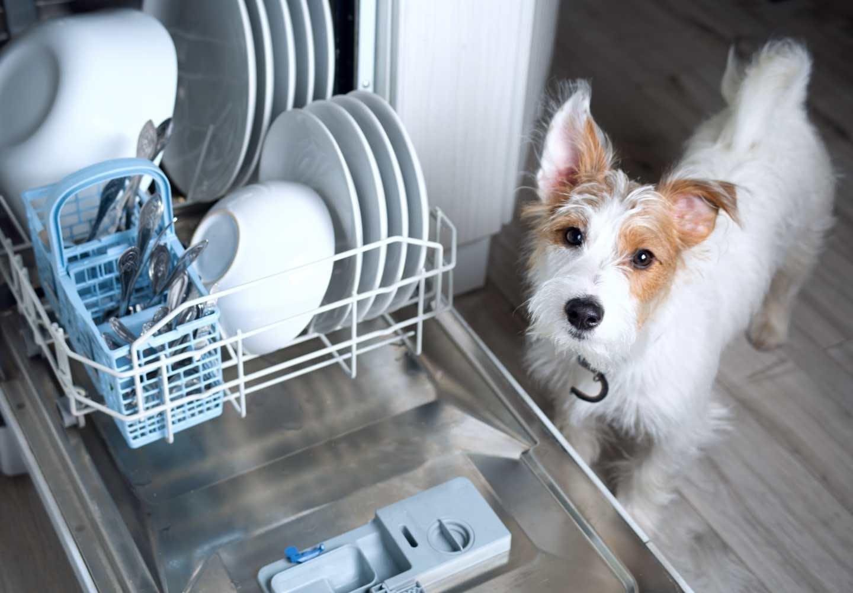 犬の食器のヌルヌルの正体は?