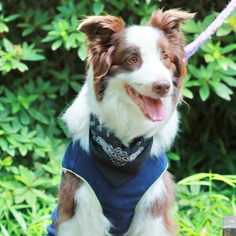 愛犬用手作りクールネック×市販のクールウエアで熱中症対策