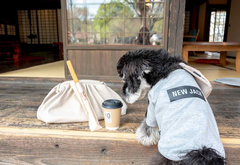 愛犬と散歩 『10 picnic tables』