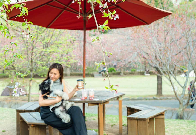 天平の丘公園  10 picnic tables