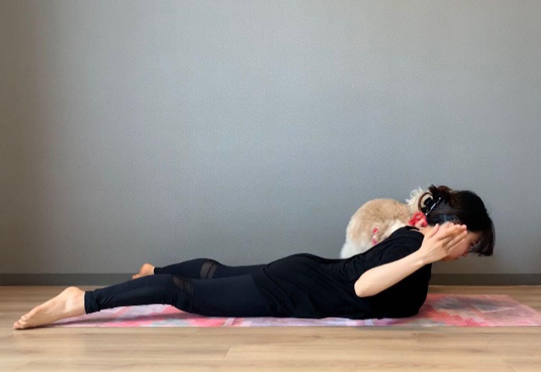 背中引き締めドッグフィット 肩甲骨周りをほぐして鍛える 肘から上を持ち上げる