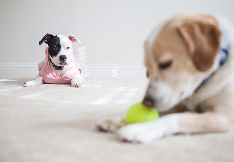 嫉妬をする犬