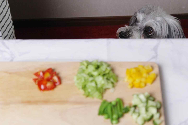 愛犬には体温調節のバランスが取れる食材 シュナウザー