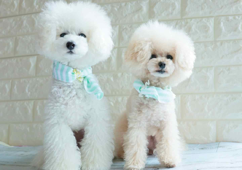 手作り保冷剤を使った《愛犬用クールバンダナ》の作り方 愛犬着用