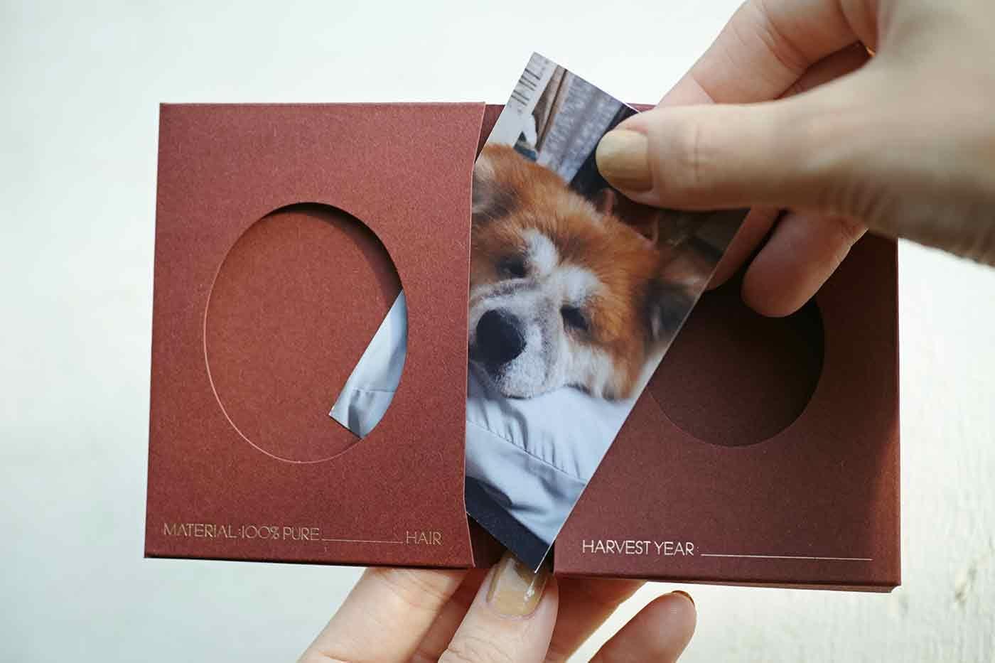 愛犬の写真と抜け毛を専用の箱に入れる