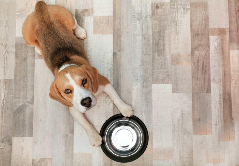 犬の食器のヌルヌルの正体は?正しい洗い方も紹介【獣医師監修】