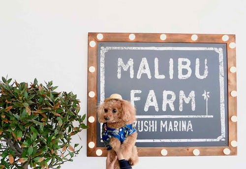 LA発の人気店『マリブファーム 逗子マリーナ』で愛犬とランチ♪