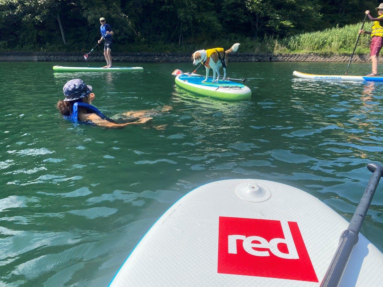 野尻湖でSUPする犬と飼い主